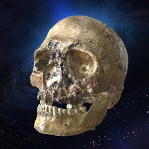 Artec3D scanned part - Human Skull - Cheddar Man